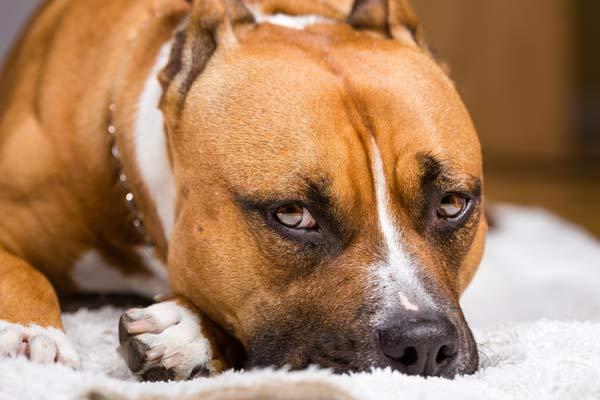 seemingly calm dogs can be dangerous - dog injury attorney
