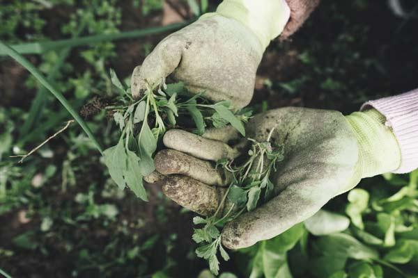 gardening weed killer cancer risks